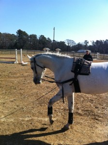 My Arabian horse Wiley working on the lunge line