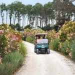 Golf cart with flowers 2011