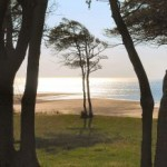 beach_haven_bay_views_through_trees