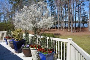Pear Backyard with water