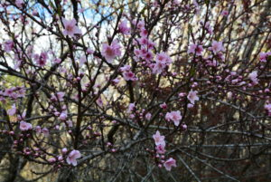Close up Blossoms